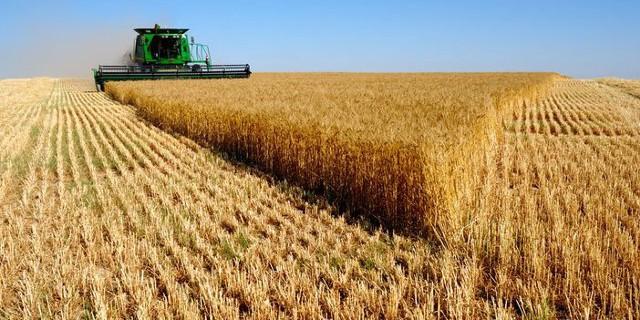 Урожай зерна в РФ уже