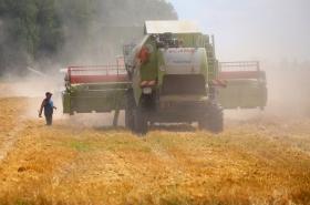 Урожай зерна в РФ
