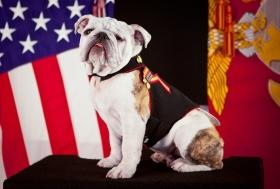 США: «собачьи» цены на